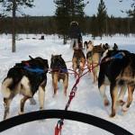Gastblog: met Mandy naar Lapland!