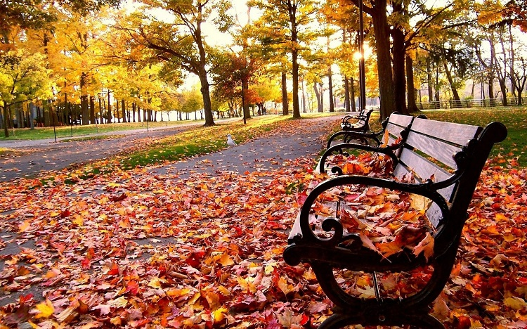 waarom-de-herfst-heerlijk-is.jpg