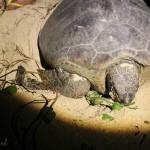 Borneo: Turtle island