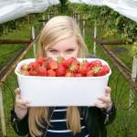 7 jaar samen vieren met een aardbeien date