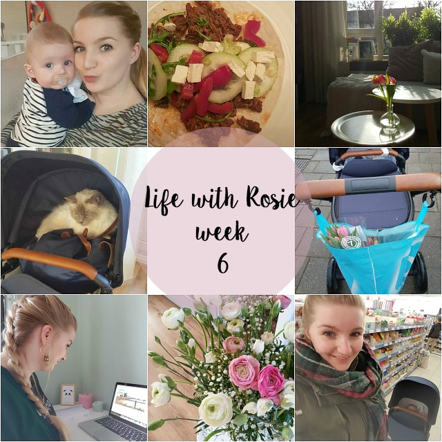 collage week 6 life with rosie