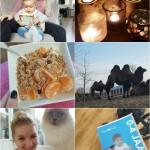 Life with Rosie week 47 |dagje dierentuin, naar de kapper met Flynn en prikjes!