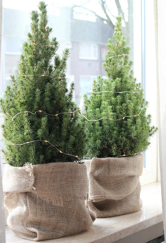 jute-zakken-kerstboompjes
