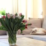 Met deze 3 tips haal jij de lente in huis!
