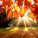 Herfst, i love you