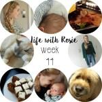 Life with Rosie week 44