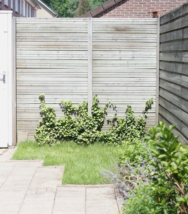 Onze tuin 2