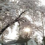 Happy life   Een ode aan de lente!